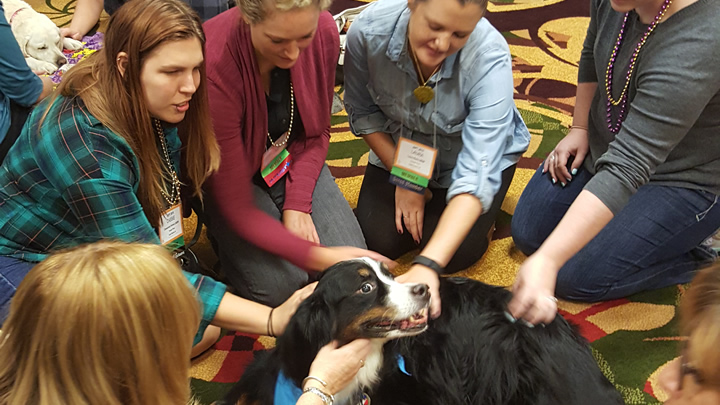 Corridor Therapy Dogs at IAPT Conference